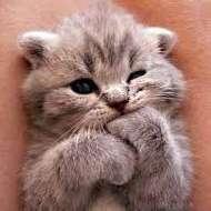 KittenLover1
